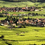 Vineyards in Alsace