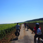 Cycling among vines near Gevrey Chambertin in Burgundy.
