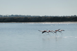 2. Flamingos in the Camargue